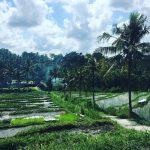 Bali Tradition : pour une découverte authentique de l'ile des Dieux